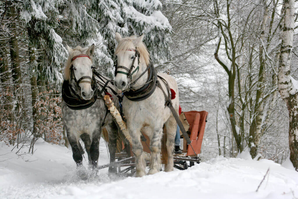 two horses pulling a sleigh through snow covered trees